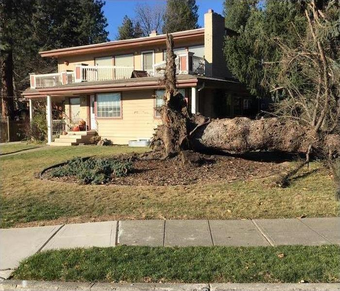 Giant tree falls in front yard damaging balcony