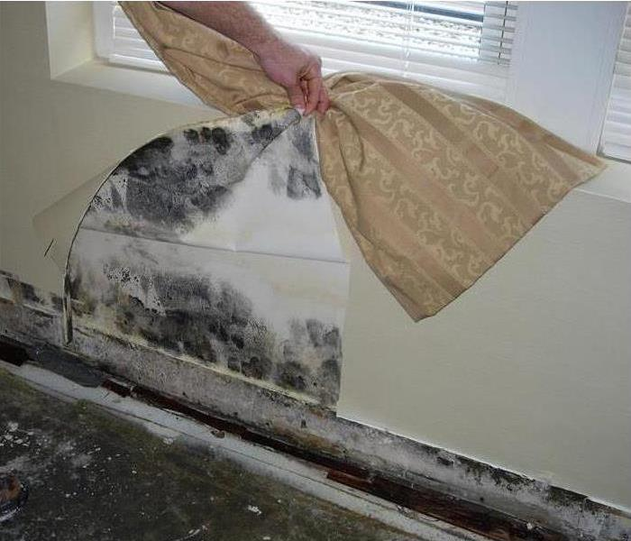 Mold Remediation So You Sent The Restoration Company Home Early...